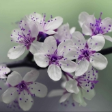 white and purple petal flower focus photography